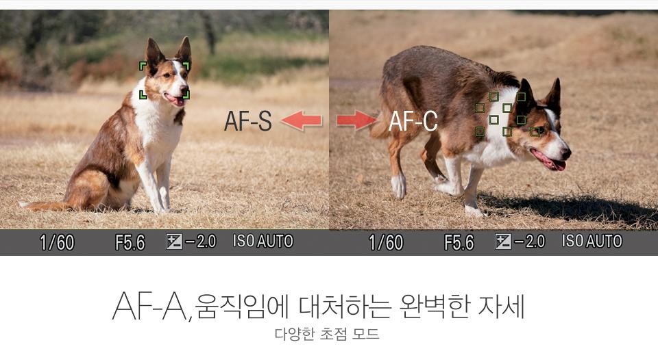 AF-A, 움직임에 대처하는 완벽한 자세 / 다양한 초점 모드